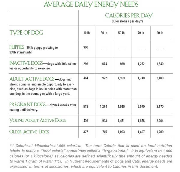 food requirements of dogs There are also dog food feeding requirements for your adult dogs to maintain their health.